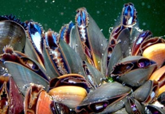 Mussel_Reef_Trimmed.jpg